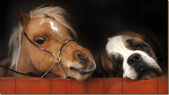 HORSE-AND-DOG-BEST-FRIENDS